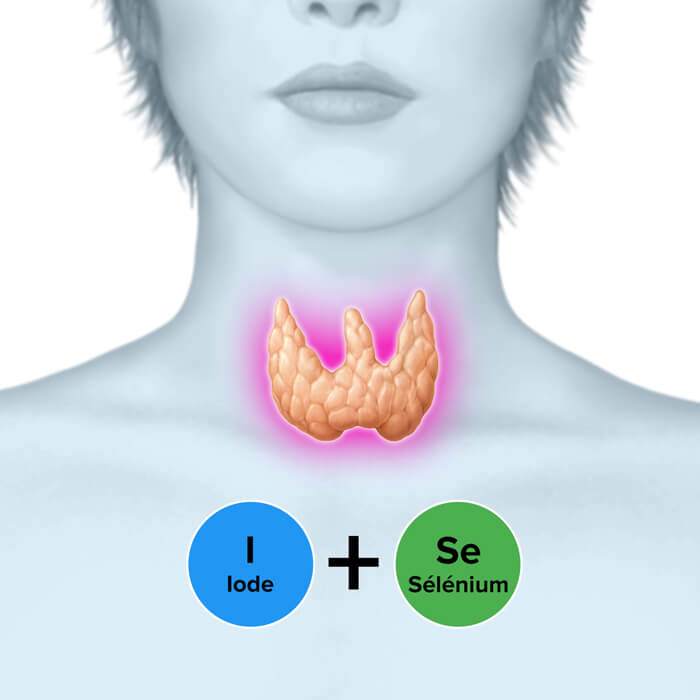 Thyroflor - Glande thyroïde