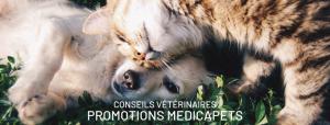 PROMOTIONS MEDICAPETS - Notre vétérinaire vous explique tout